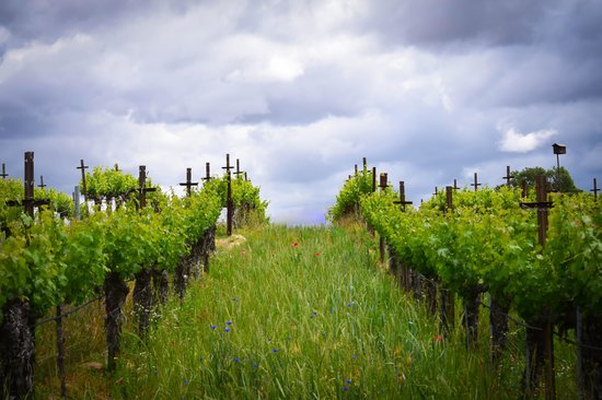 Grapeline Wine Tours: Wilson Creek Winery