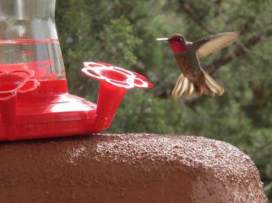 Sedona Cathedral Hideaway : Hummingbird Show