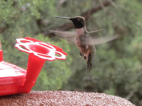 Sedona Cathedral Hideaway: Hummingbird Show Cont...