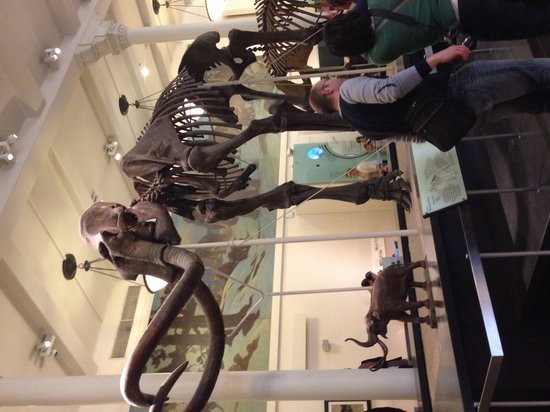 American Museum of Natural History : AMNH