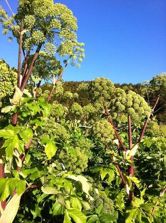Takaro Lodge: Organic Herbs at Takaro