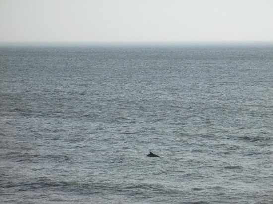 Sea Ranch Resort : We saw dolphins from the room; they were there for a long time!