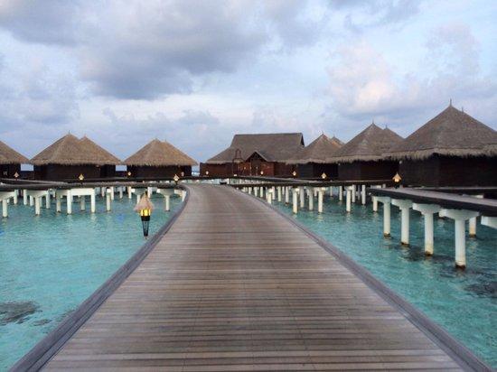 Taj Exotica Resort & Spa: O caminho para os quartos Deluxe