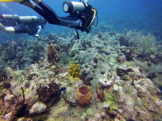 Sea Saba Advanced Dive Center : Saba Hot Springs