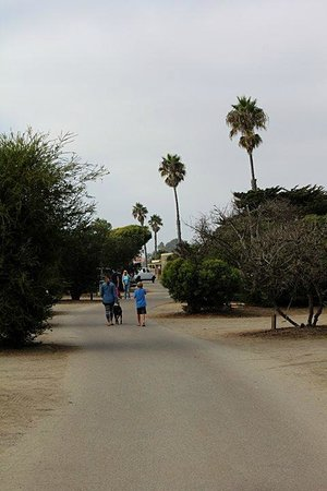 San Elijo State Beach Campground: Camp Site