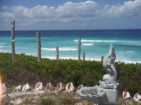 The Ocean Dream Beach Resort : Awesome views!