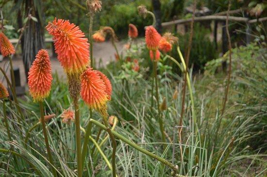 Parque Nacional El Boqueron: Unique flowers