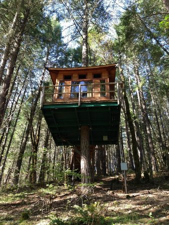 Vertical Horizons Treehouse Paradise: Shitake