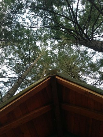 Vertical Horizons Treehouse Paradise: Look Up your in the Trees