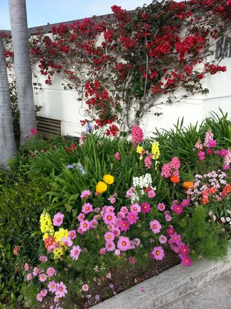 Bay Club Hotel & Marina: Lovely flowers