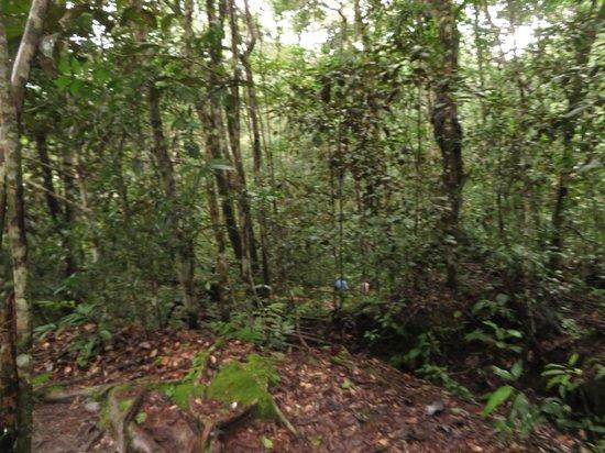 Santuário Falls: muito verde