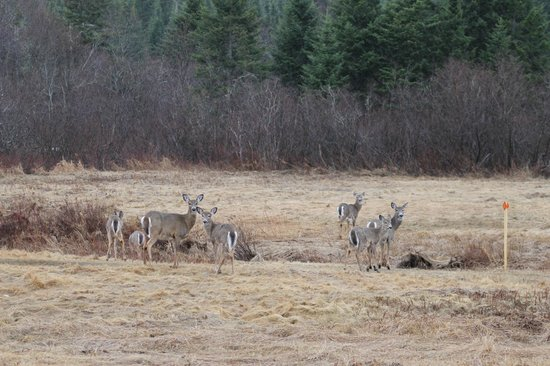 Plenty of deer picture of lopstick pittsburg tripadvisor for Plenty of fish nh