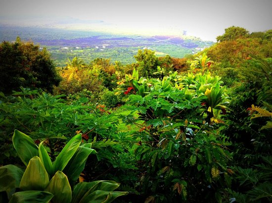 Ka'awa Loa Plantation: Spectacular Views