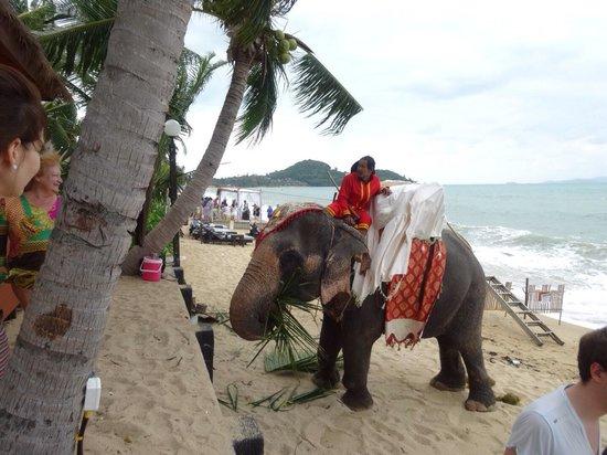 Bandara Resort & Spa: beach