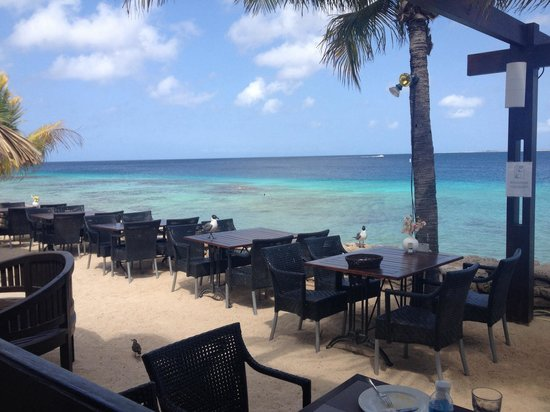 Plaza Resort Bonaire : Restaurant ������