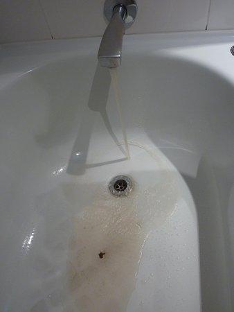 Copthorne Hotel & Resort Bay of Islands: Dirty water