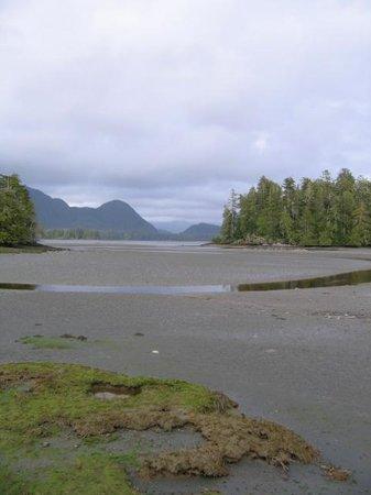 Jamie's Rainforest Inn: Tofino mud flats