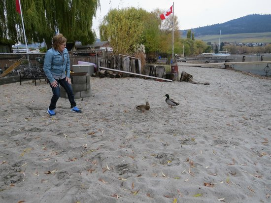 Lakeshore Paradise: feeding the ducks