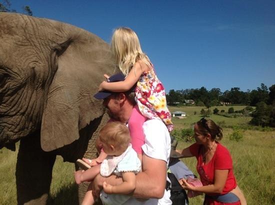 Knysna Elephant Park: the Mayes family meeting one of the Ellies