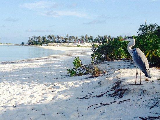 Fun Island Resort : Questo e' il lato meno bello dell'isola...vi pare?