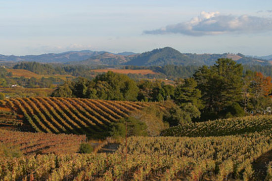 Red Wine Roads: Dry Creek, Sonoma County