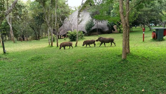 Lokuthula Lodges: The gardeners hard at work