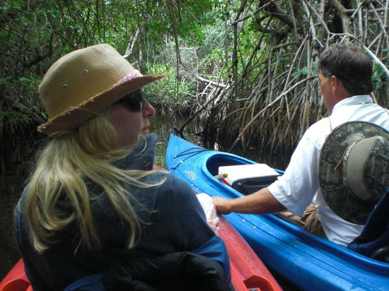 Tour the Glades - Private Wildlife Tours: Mangroven-Tunnel