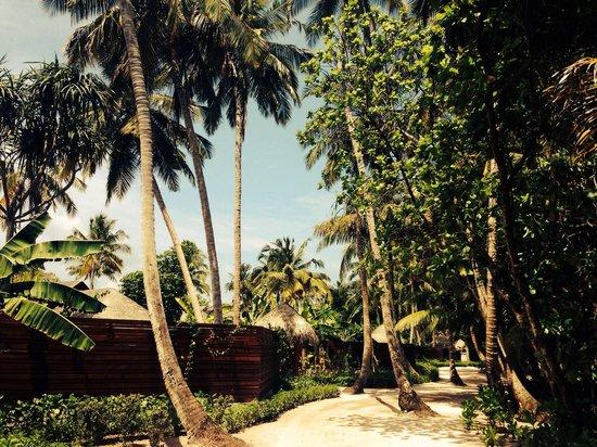 Dusit Thani Maldives: Sandy path all around the island