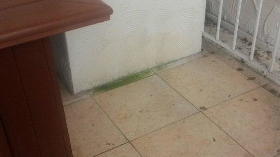Mayfair Hotel & Spa: Algae growing on the floor and wall