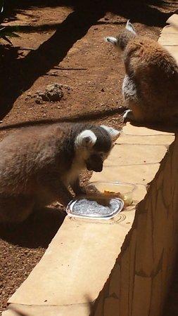 Monkey Park : Sniadanko:-)