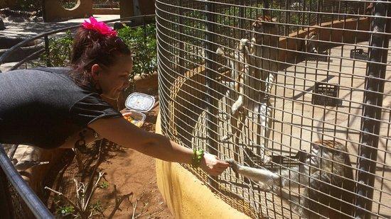 Monkey Park : :-)