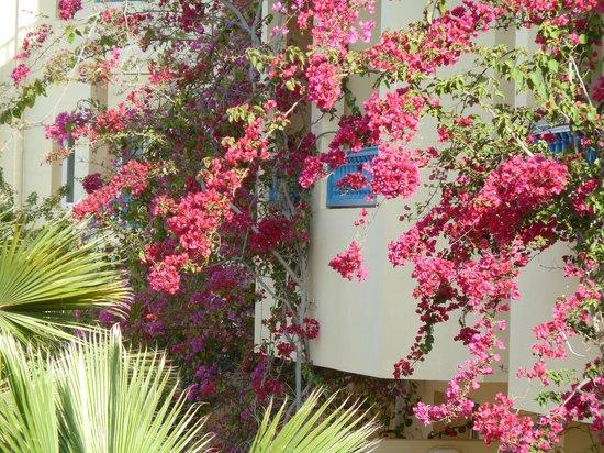 Hotel Djerba Les Dunes: Les fleurs madnifiques