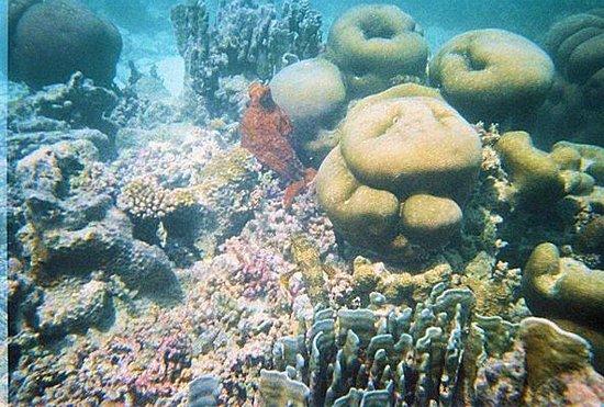 Baros Maldives: Octopus