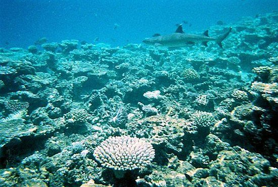 Baros Maldives: white tip shark in the distance
