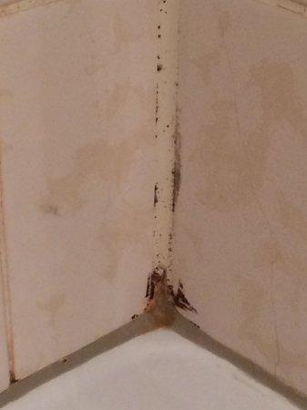 Hotel Restaurant Weinlaube: Schimmel in der Dusche.