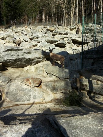 Alpenzoo: Горные козлы и козлята