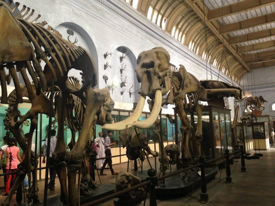 Indian Museum (Jadu Ghar): Zoology gallery