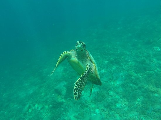 Danima Resort & Restaurant : Got to see the turtles out the front while snorkelling