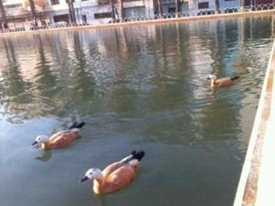 Vincci Malaga : casarca goose