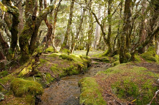 Tasmanian Wilderness Experiences - Base Camp Tasmania: Myrtle Forest, Overland Track