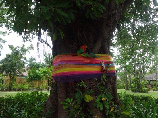 Bandara Resort & Spa : banyan tree