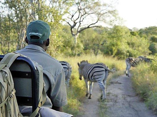 Umkumbe Safari Lodge: So nah kommt man wilden Tieren sonst nie