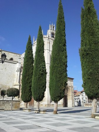 Palencia Cathedral : elegantly trimmed trees