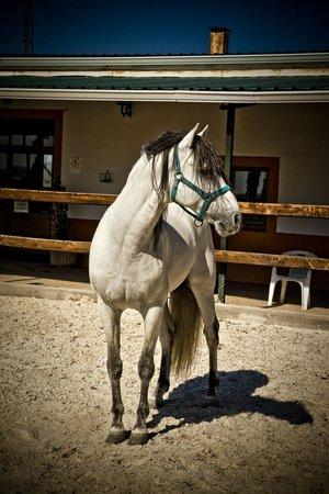 Villa Nazules Hotel Hípica Spa: Precioso caballo de Hipica