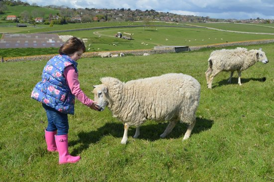 Seven Sisters Sheep Centre: Making friends with Ewe!