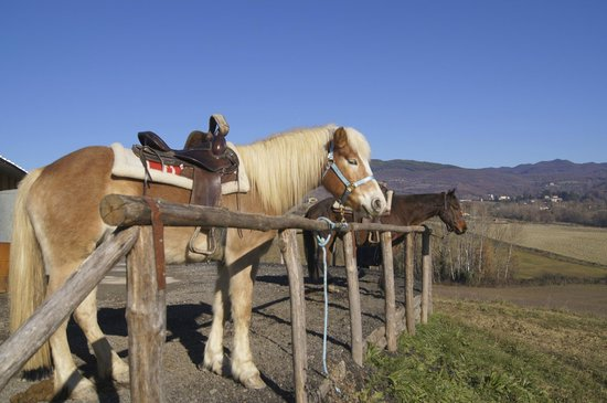 Toscana Ranch: Ranch Ricavo