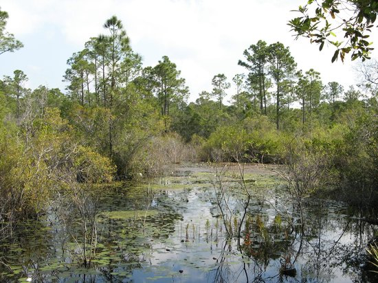 Gulf State Park : Swamp from Bicycle Trail