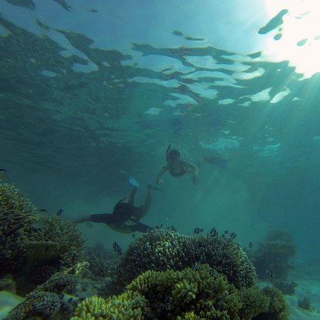 Guraidhoo Vacation Inn: Snorkeling in Maldives