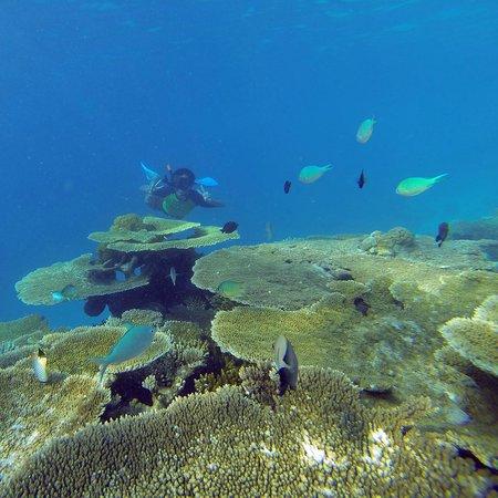 Guraidhoo Vacation Inn: Snorkeling in Maldives