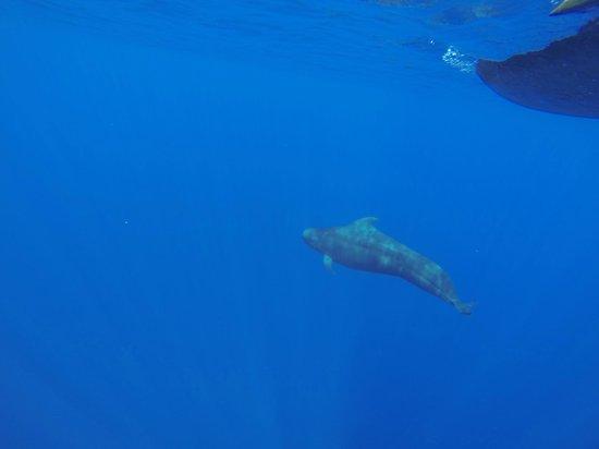 Guraidhoo Vacation Inn: Yup! We saw dolphins!